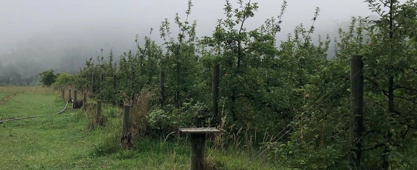 Eddies cider organic orchard