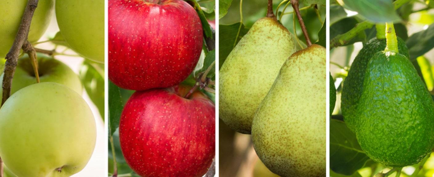 produce of Mock