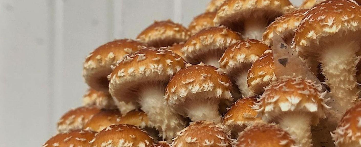 Mushrooms by Mushroom Forestry