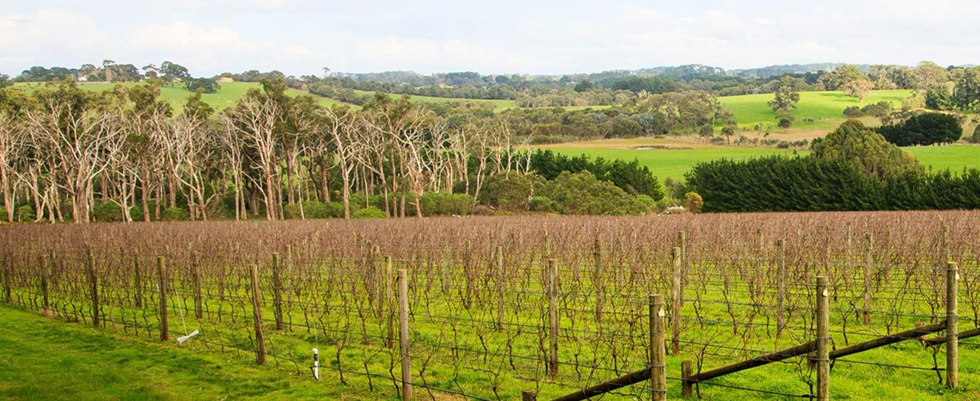 Scorpo wine vineyard