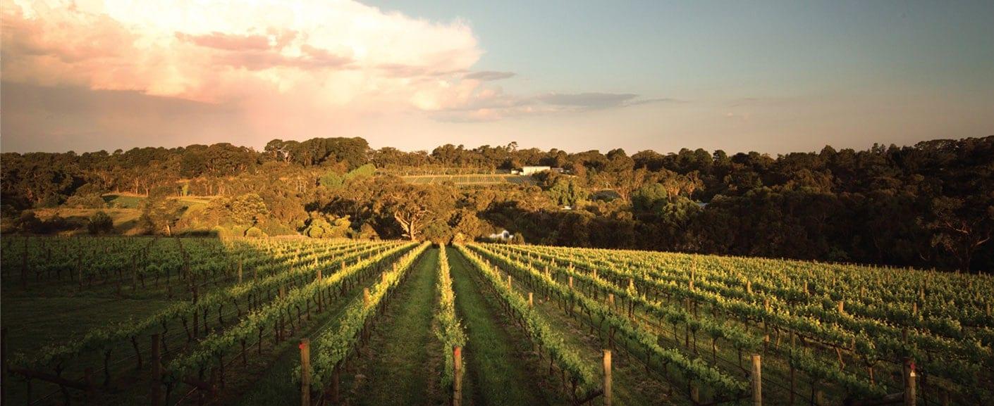 Ten Minutes By Tractor - Vineyard